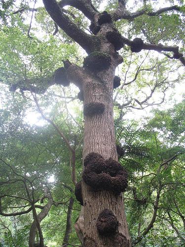 Деревья тоже болеют раком Дерево, Рак, Жесть, Соберем деньги на лечение, Длиннопост