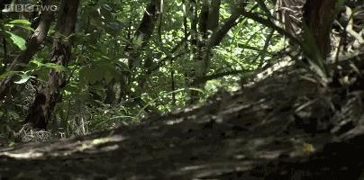 Какапо - птицы не умеющие летать