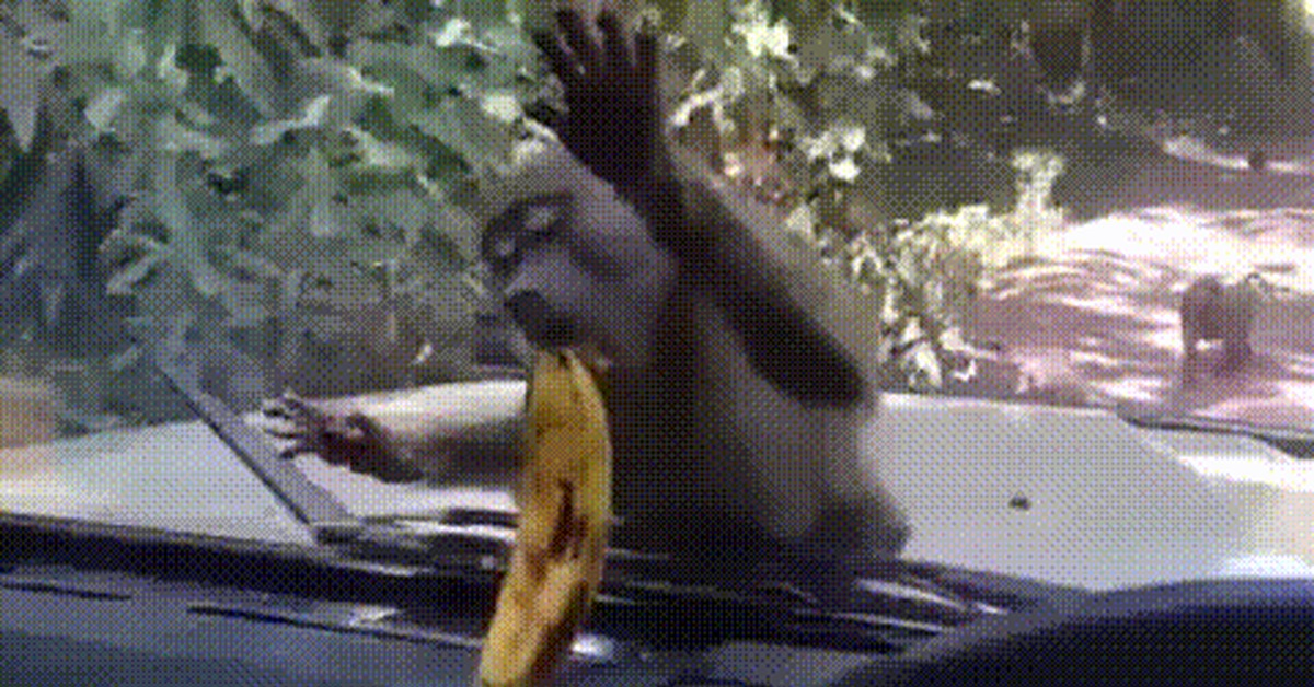Гифка обезьяна ест