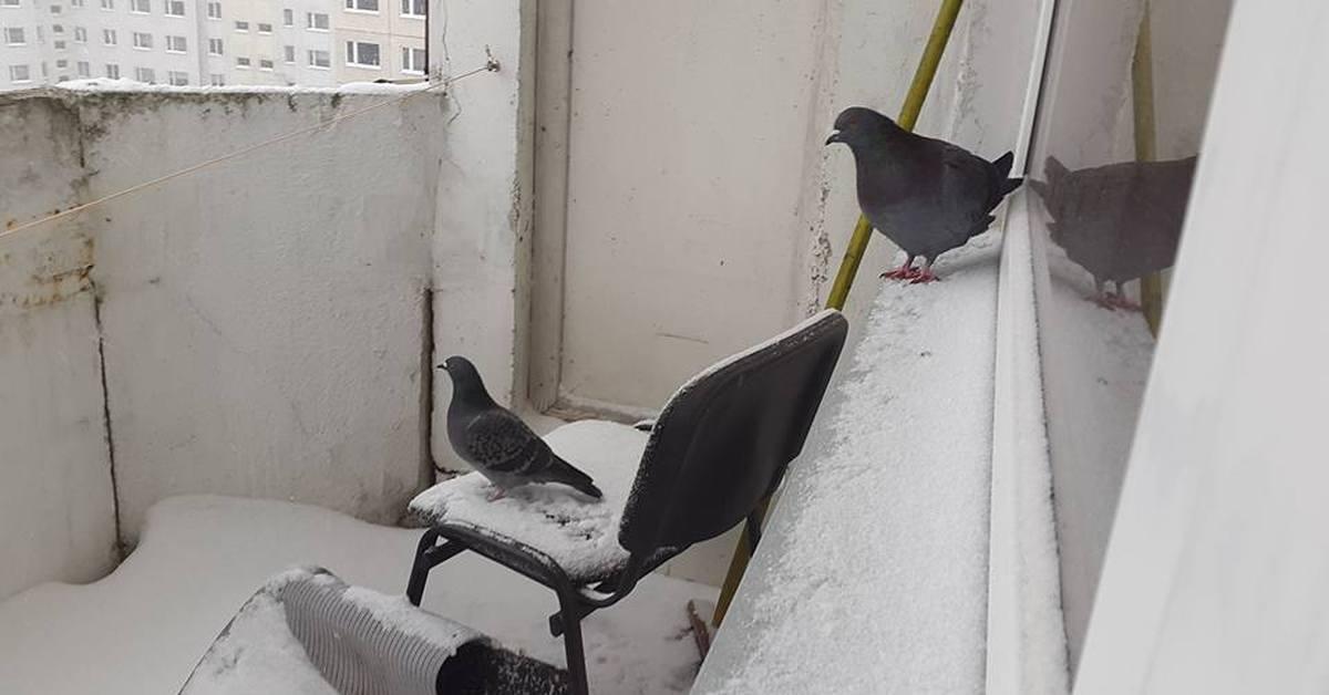 Стул для голубя.