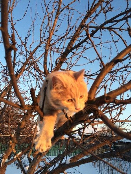 Фотогеничного кота пост Кот, Рыжий, Моё, Длиннопост