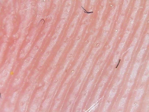 Продолжение с темой микроскопа Микроскоп, Ужас, Еда, Материал, Страх, Крипер, Вкусно, Длиннопост
