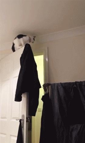 Кот против законов физики
