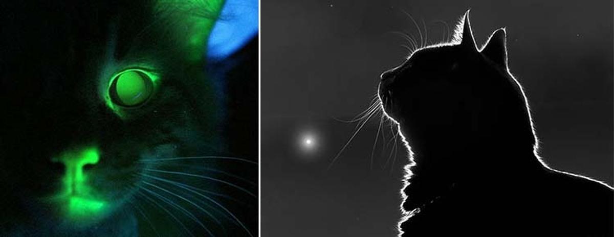 другую глаза кошки светятся в темноте картинки наоборот, резко изображаемое