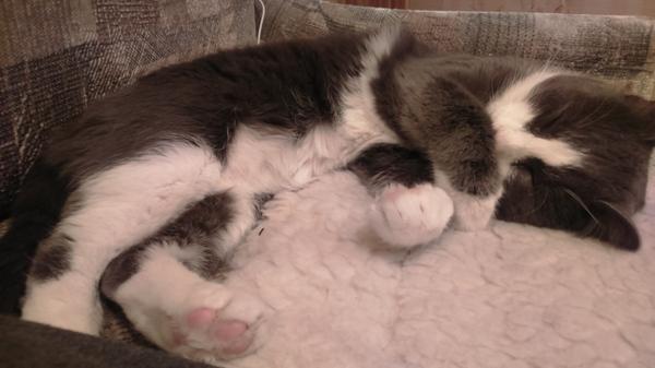 Говорят, если кошки накрывают лапой нос,значит будет мороз