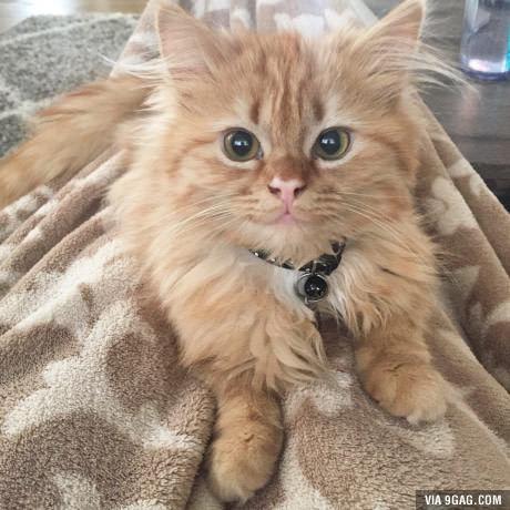 Улыбка котика