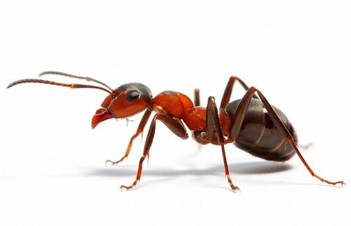 Деньги на разработку игры шли на выпивку и стриптизерш Ant Simulator, Игры, Муравьи