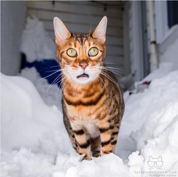 new cat litter box kickstarter