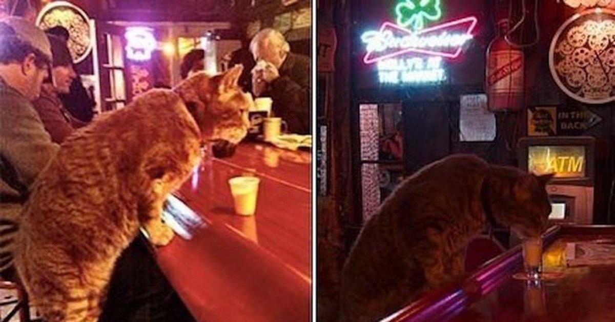 Картинки с котом для скрапбукинга апина поделилась