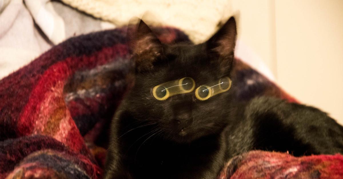 размазанная картинка кота сожалению, исторический облик