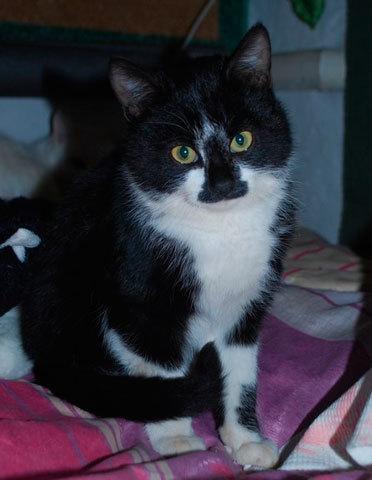 Отец-герой! Кошка, подкармливающая шестерых щенков мышками оказалась котом! кот, щенки, собака, доброта, Анапа, длиннопост