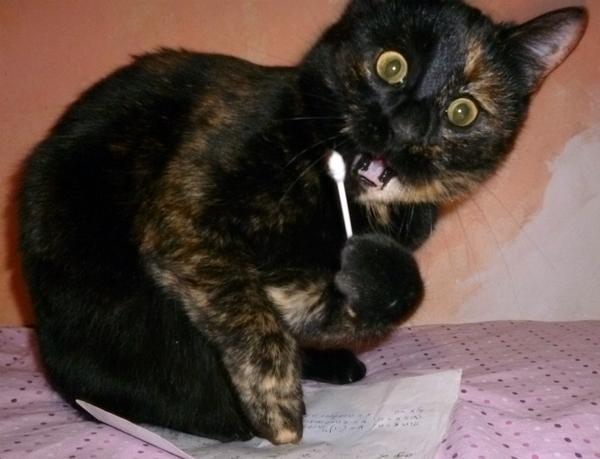 Моя зверюга Кот, Моё, Длиннопост