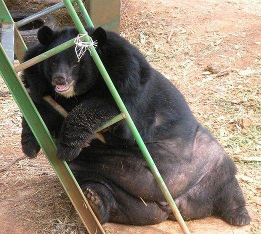 Когда кто-то говорит, что ты похудел, а ты сидишь такой