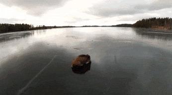 Спасение кабана Кабан, Швеция, Спасение, Дикая природа, Животные, Млекопитающие, Гифка, Керлинг