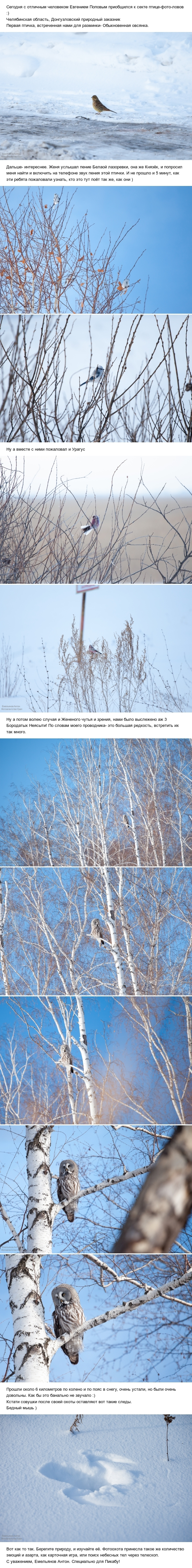 О том, как я за птицами охотился! Птицы, Челябинская область, Фото, Фотоохота, Природа России, Природа, Длиннопост