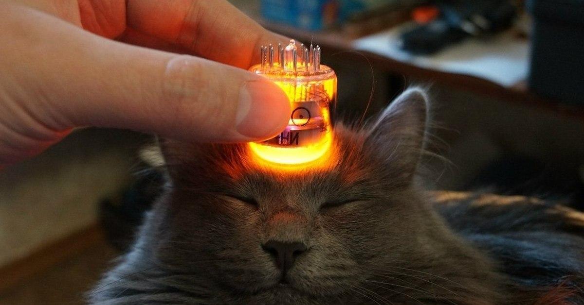 ламповые картинки атмосфера котики запомнил