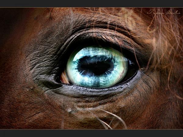 глаза лошади фото