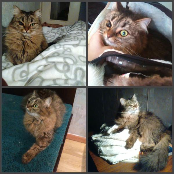 Ищу кошку! Ищу, Кот, Потеряшка, Салават, Помощь