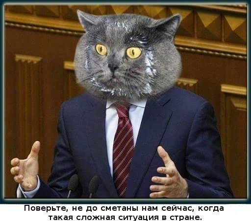 Главное- это уверенно говорить. политика, демагогия, морда, почти честно, кот