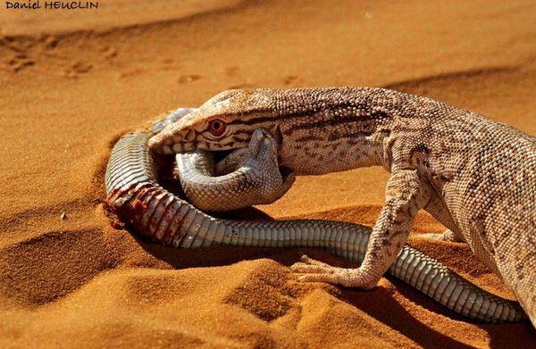 можете опасны ли ящерицы для человека крепить конструкции
