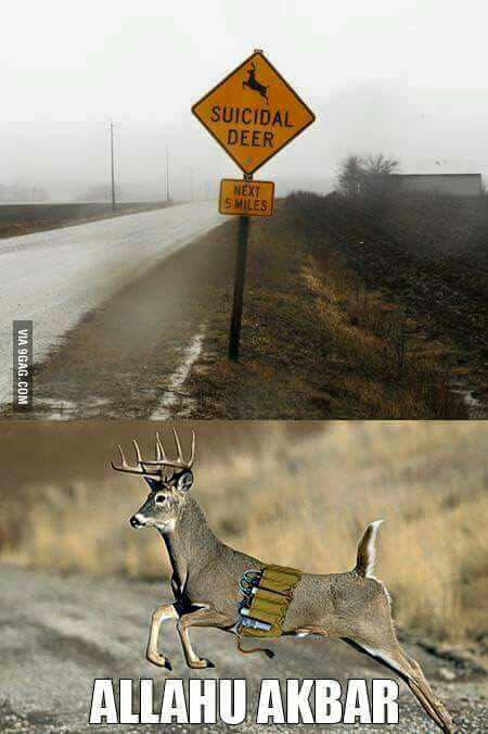 Осторожно, впереди олени-смертники!
