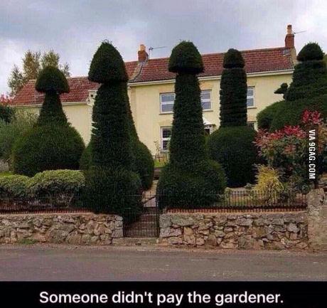 Кто-то не заплатил садовнику