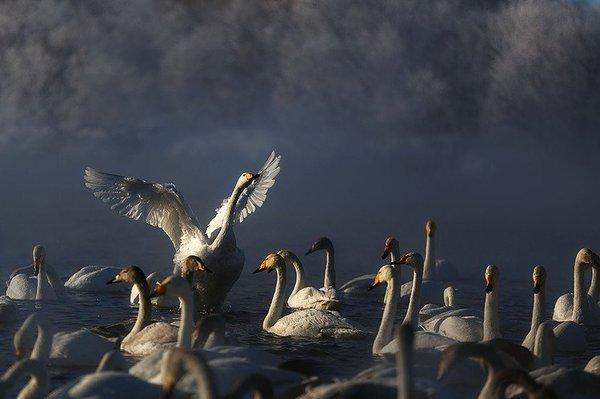 Cамые красивые уголки нашей страны Байкал, Река Листвянка, Лебединый, Орловское озеро, Истра, Муринский парк, Ямало-Ненецкий, Длиннопост