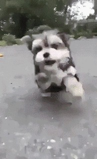 Собака Майкла Бэя