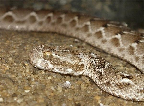 Хотелось бы поздравить Московский зоопарк с днём рождения!) Заодно продемонстрирую вам самых прикольных змей из коллекции змея, московский зоопарк, Рептилия, животные, ядовитая змея, гадюки, мамба, длиннопост