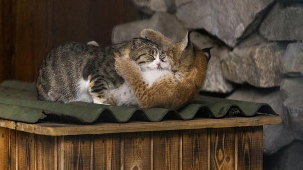 cat panic attack