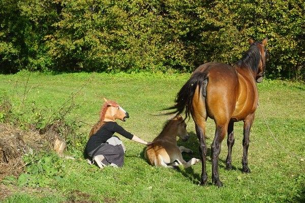 Думай как лошадь, выгляди как лошадь, погладь лошадь