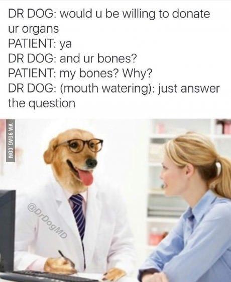 Доктор пёс Пёс док, Доктор пёс, 9gag