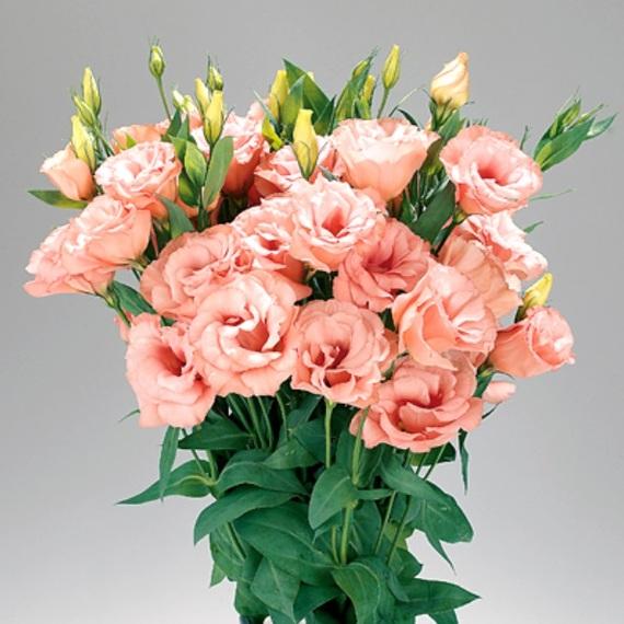 Как выбрать свежие цветы.