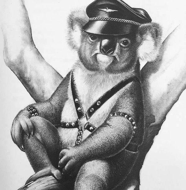 Никого не напоминает?) Коала, Черный властелин, Природа, Иллюстрации