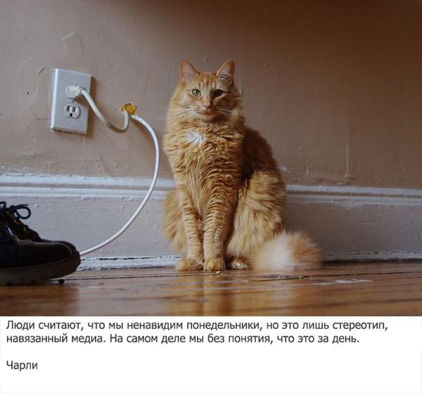 cat behavior secrets revealed portugues