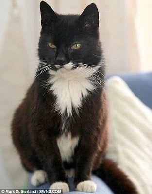 Фото рекордов котов