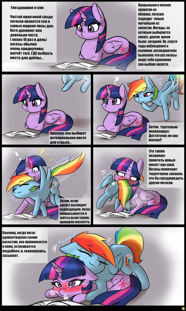 [Перевод] Гнездование и сон пегасов my little pony, twilight sparkle, rainbow dash, перевод, сон