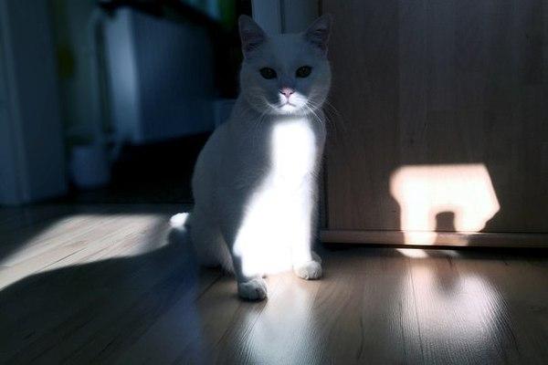 Серьёзность кота