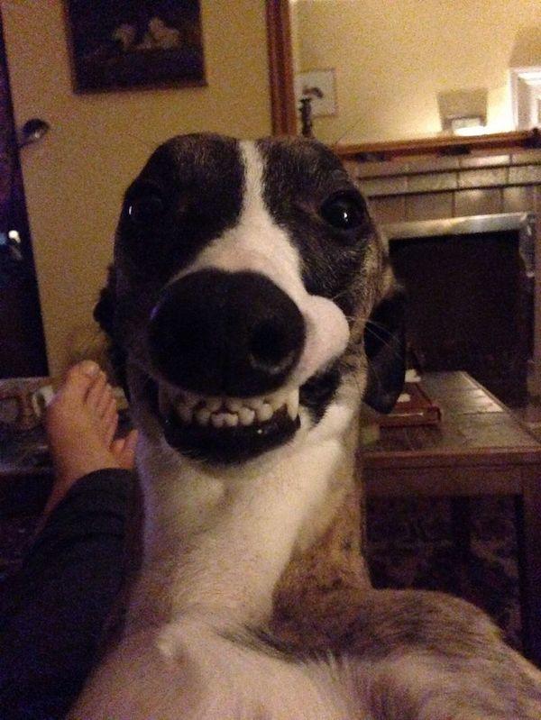Этот пес выглядит так,словно у него свой канал на You tube!) Жучка, собака, youtube, улыбка, красавчик, Веселый песик, позитив, юмор