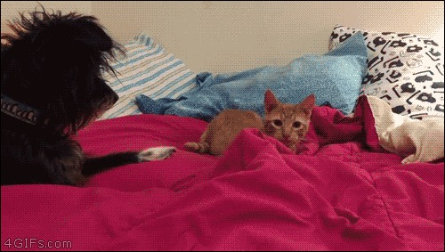 how to train cats to sleep at night