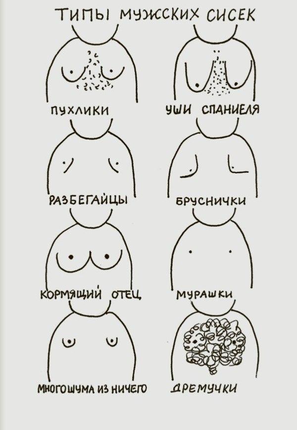 сиськи и их классификация-хд3
