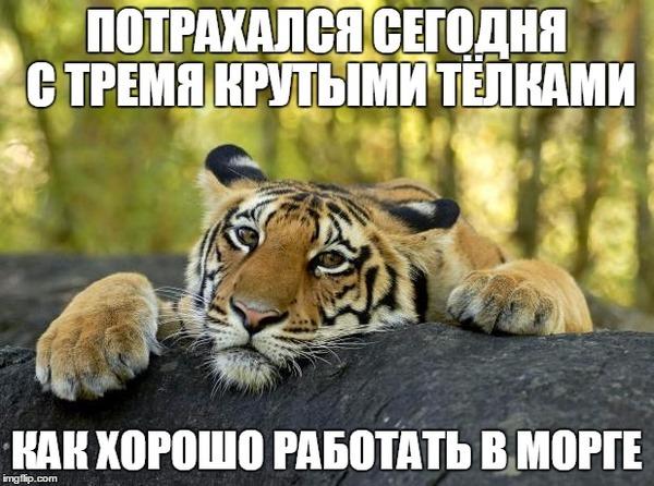 Откровения одного тигра Черный юмор, Confession tiger, Признание, Длиннопост