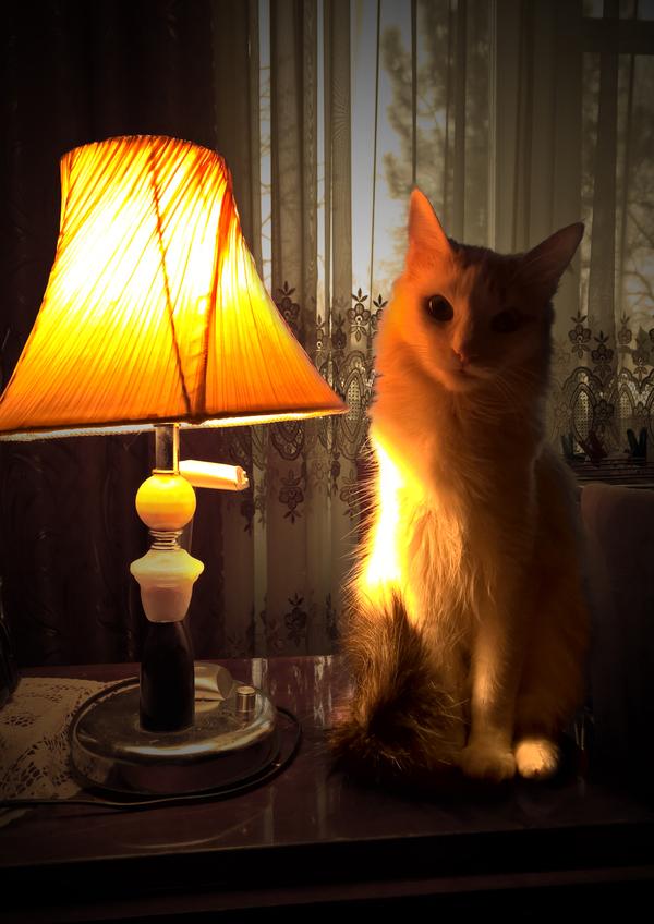 Вечер теплых ламповых историй Кот, Лампа, Время офигительных историй