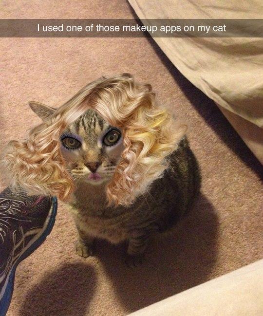 Кот что говорит приложение
