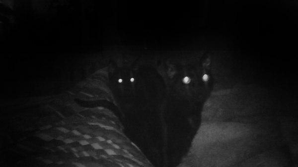 Приходится вставать и насыпать им корма. Чтобы они не сожрали мою душу. Крипота, Котыкруты, Черные коты, Фото, Кот