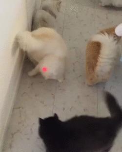 Двенадцать котов против одной красной точки.