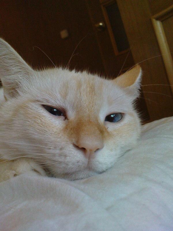 В поддержку дня кошек. Моё когтистое чудовище и лютый квартирный хищник! Фото, Кот, Хищник, Чудовище, Длиннопост