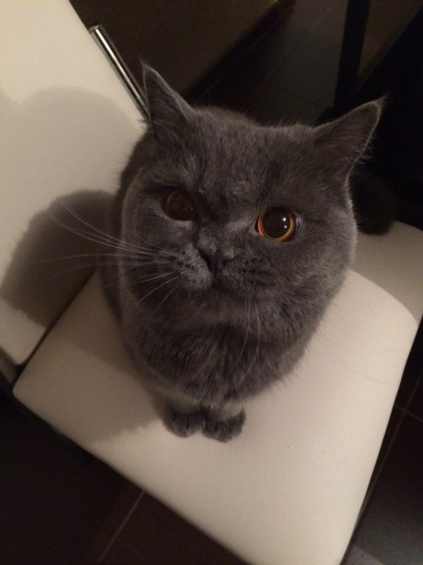 Эпичный котэ!