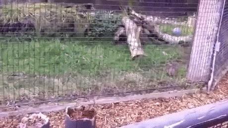 Детям понравится в зоопарке