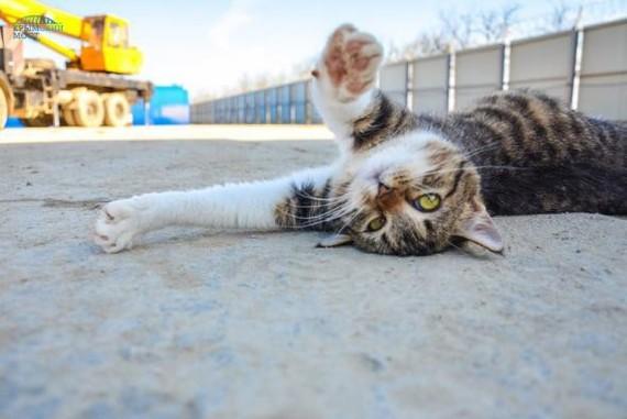 Крымский мост. Рассказ о живности живущей на стройке. кот, Крым, мост, лиса, длиннопост, Керчь, не мое